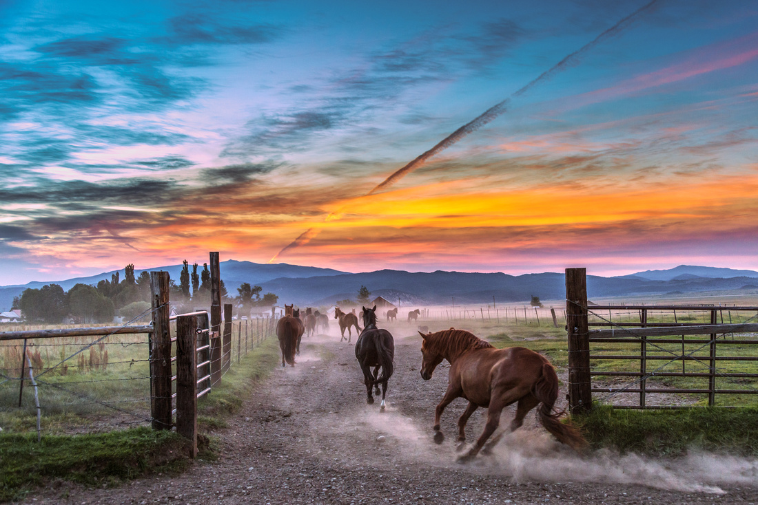 Award winning photo depicting horses being wrangled in on a cold morning.